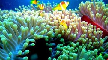 Atolli e Coralli